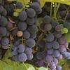 Wine & Food Tour Monferrato Piedmont Italy