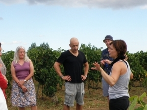 Wine tasting tours of selected boutique wineries Photos