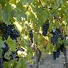 Wine Tour  - Colchagua Valley