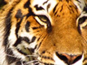Zoo Miami Photos