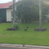 Convenient location in Cairns