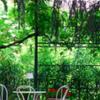 garden parking private apartment