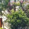 green house, photography, birding