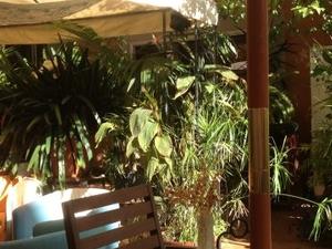 Lush green terraces, cozy room