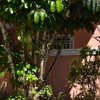 Room in the heart of Coral Gables
