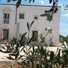 Surrounded by olive trees of Ostuni