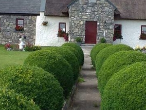 Thatched cottage  B&B