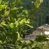 Tuscany, Florence, farmhouse
