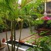 Angkor Garden Guesthouse