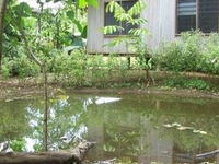 Bibiko Farm