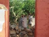 Cunucu Arubiano Eco Villas