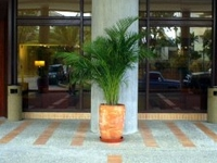Marriott Hotel Playa Grande