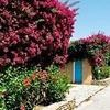 Agrustos Village