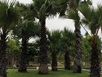 Pattara Resort & Spa, Phitsanuloke
