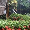 Frendz Resort Boracay