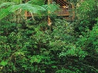 The Canopy Rainforest Treehouses And Wildlife Sanc