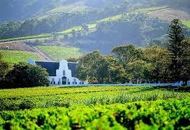 Cape Town Winelands Tour Photos