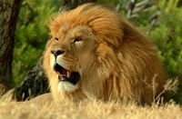 Cape Town Luxury Safari Tour Photos