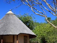 Fully Inclusive Standard Safari Experience in the Kruger Park