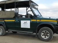 Safari Expereince of the Kruger National Park