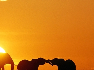 A Taste of Kenyan Culture & Safari Photos
