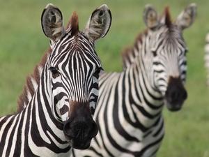 Lake Manyara Park | Ngorongoro Crater | Serengeti National Park Photos