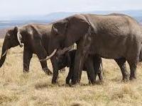 Maasai Mara Budget Camping