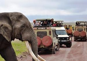 Northern Tanzania Wilderness Safari Vacation
