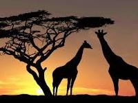 6 Days Safari - Masai Mara & Lake Nakuru