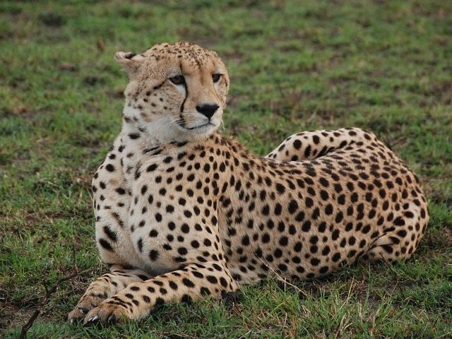 Selous Game Reserve Safari Photos