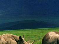 Wildlife Safari Tour, Ngorongoro and Serengeti