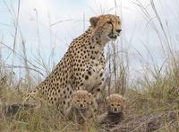 BMS Safaris And Tours