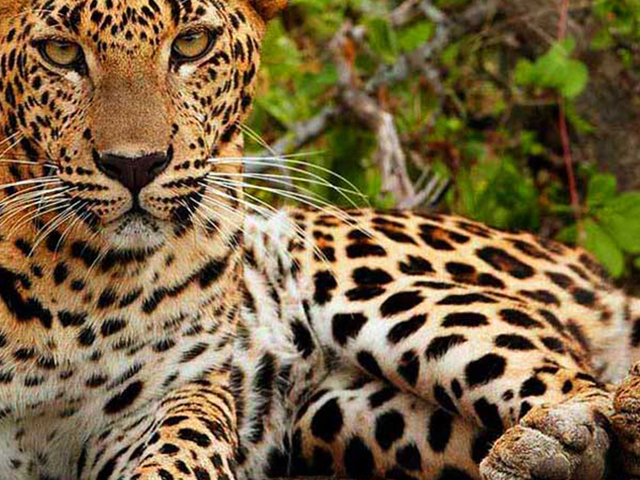 Big Five - Sri Lanka Wildlife Escape Photos