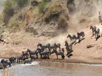 Catch the Big 5 Joining Safari