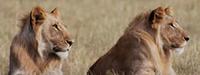 Nitarudi Safaris