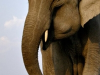North East India Wildlife