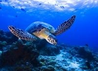 Turtle Jpg Nggid0229 Ngg0dyn 215x145x100 00f0w010c011r110f110r010t010
