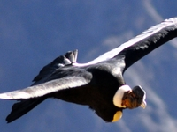 Colca Canyon 02 Days/01 Night By tourism Bus