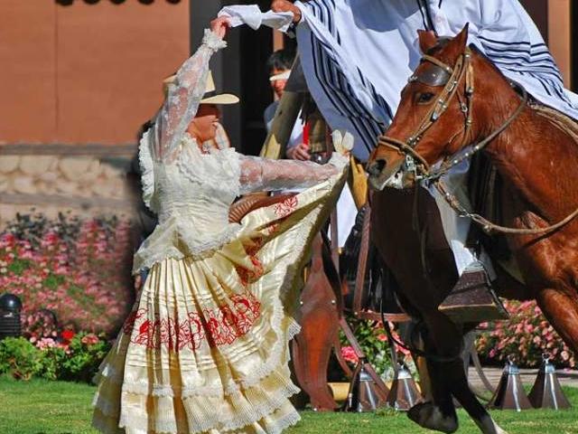 Peruvian Paso Horse Exhibition Photos