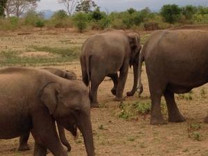Pinnawal Elephant Orphanage Tour Fotos