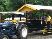 Prospect Estate Jitney Adventure and Camel Ride from Ocho Rios