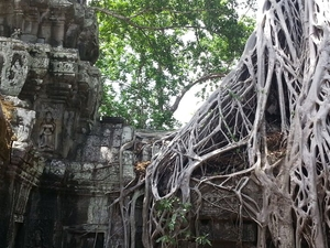 A Tour Inside a Jungle Temple Since 12th Century Photos