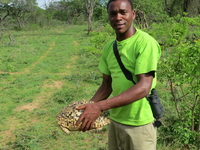 I And Leopard Tortoise Having A Friendly Chat But My Friend Was A Bit Not Trusting Me. Its Lovely Out Here. Tanzania