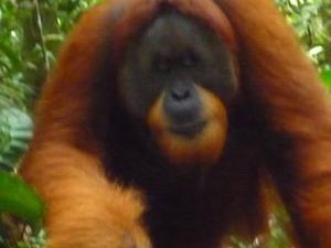 Sumatra - Jungle Trekking Tour Packages Fotos