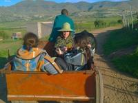 Lesotho Excutions