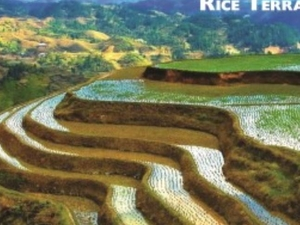 Rice Terraces Ecotour Photos