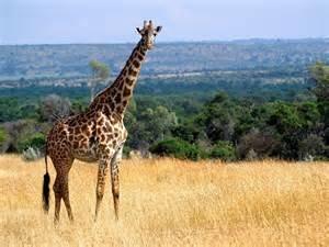 Nairobi Excursion Fotos
