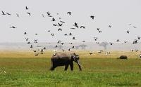 Baboon Safaris
