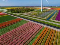 Tulip Fields Tour - Airplane