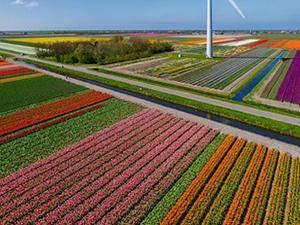 Tulip Fields Tour - Airplane Fotos